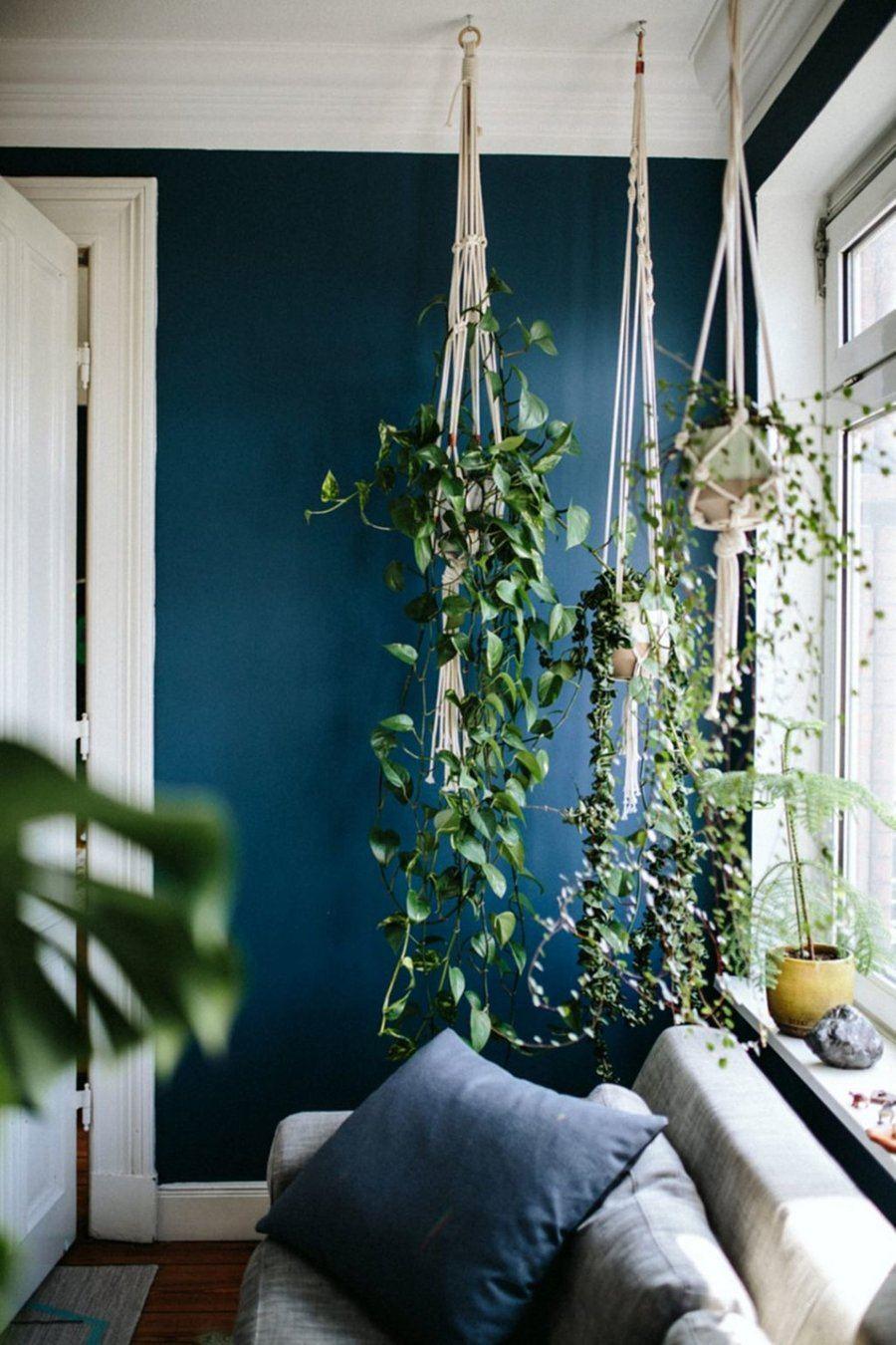 Озеленяемся! 7 идей по украшению интерьера домашними растениями